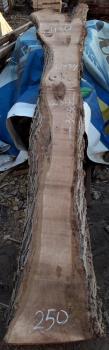 Слэб кавказского ореха, сухой, №О34