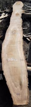 Слэб кавказского ореха, сухой, №О44