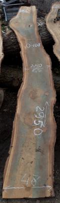 Слэб кавказского ореха, сухой, №О108
