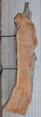 Слэб горного тополя, сухой № Т166