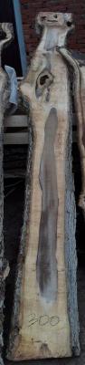 Слэб кавказского ореха, сухой, №О62