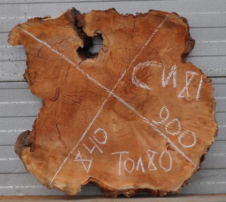 Спил кавказского ореха, сухой, №СО81